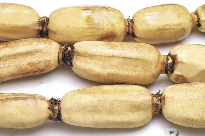 Củ sen (còn được gọi là ngó sen)là thực phẩm phổ biến ở nước ta. Củ sen có rất nhiều tác dụng đối với cơ thể con người. Vì thế mà nó không đơn thuần chỉ là một món ăn mà đã trở thành một vị thuốc trong Đông y. Cùng tìm hiểu về công […]