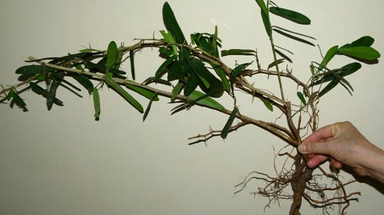 Ủy ban Nhân dân tỉnh Khánh Hòa vừa đồng ý chủ trương cho Công ty cổ phần Dược phẩm Khánh Hòa trong việc nghiên cứu, nuôi trồng, chiết suất, sản xuất thuốc từ cây dược liệu xáo tam phân, vốn được đánh giá có tác dụng trong điều trị ung thư. Theo kết quả nghiên […]