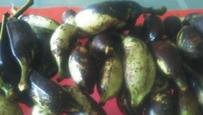 Chuối hột rừng là một loại chuối cho trái có rất nhiều hột, nhất là chuối hột mọc ở rừng. Chuối hột rừng có tên khoa học là Musa acuminata Colla, thuộc họ chuối (Musaceae). Chuối hột rừng có thân cao 3-4 m, mọc tự nhiên rất nhiều ở các vùng miền núi nước ta […]